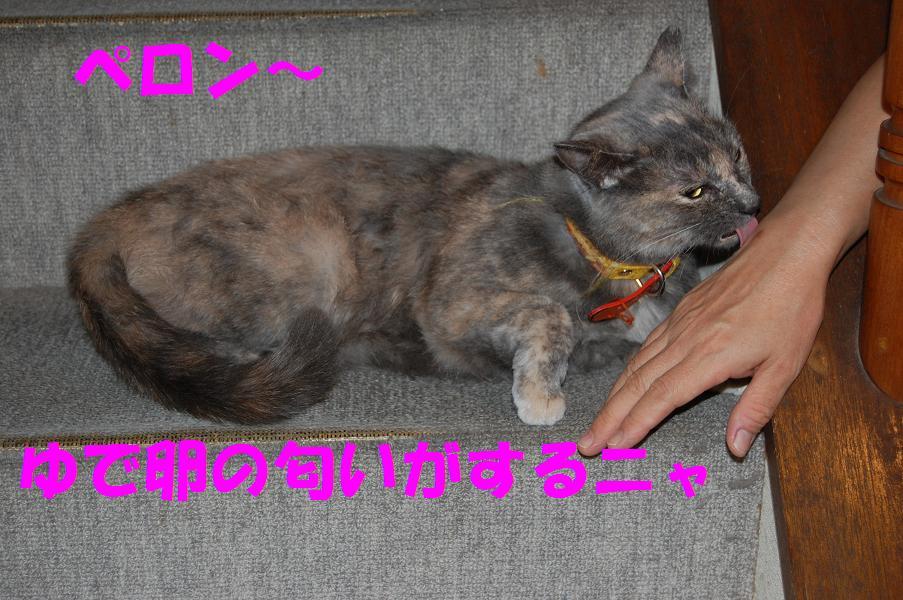 2008091411